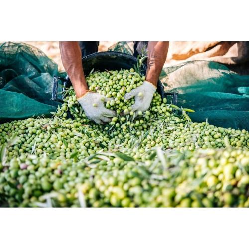 Ελαιόπανο - Ελαιόδιχτο Market Olive Net 6x12m 90gr/m² OL-N612